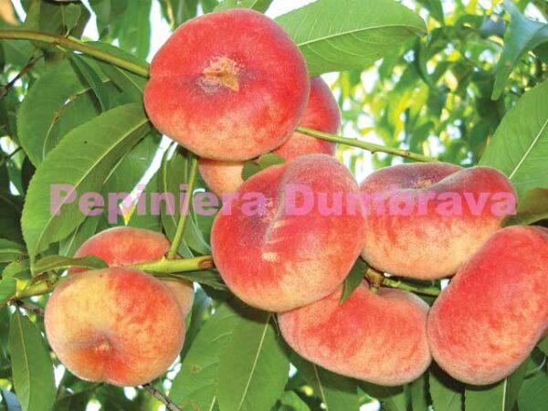 Piersic-Florin-pepiniera-Dumbrava-Gigi-Cobadin-Baneasa-Valu-Traian-pomi-fructiferi
