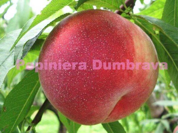 Piersic-Jerseyland-pepiniera-pomi-fructiferi