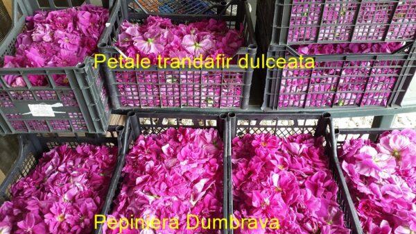 Petale trandafir pt dulceata (proaspete)