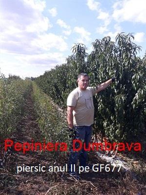 Piersic Cardinal / GF 677/ fructifica din primul an